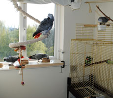 Parrots Feeding at Hotel Polly